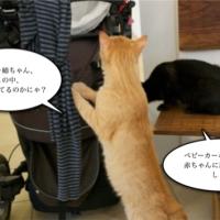 猫カフェとキャバクラの共通性。