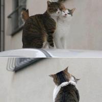 仲良し猫ちゃん画像。