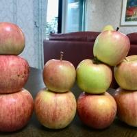 りんごの「油あがり」